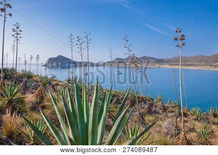 Genoveses Bay And Beach From Mountain In Gata Cape Almeria