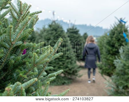 Patrons Walk And Browse A Holiday Christmas Tree Market With A Focus On Tree Branches From Douglas F