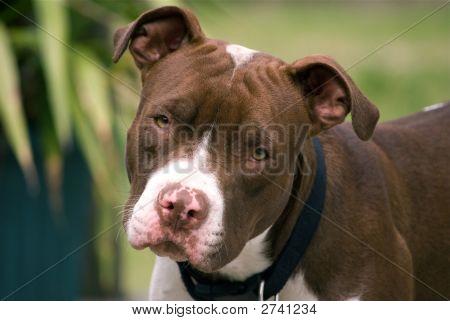 Cute Puppy Dog Close-Up