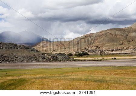 Barley Field In Tibet