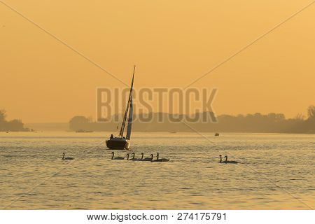 Sailing Boat In Sunset. Lifestyle Concept. Sailing On River In Sunset With Swans. Freedom Lifestyle.