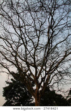 branches and tree