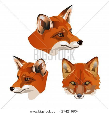 Set Of Red Fox Heads. Vector Illustration Isolated On White Background