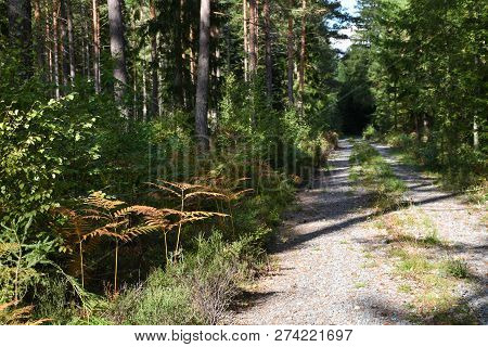 Narrow Dirt Road Into The Deep Green Forest