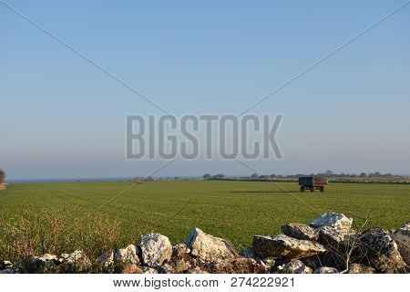 Farmers Green Field With Farm Wagons At The Swedish Island Oland