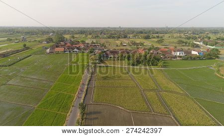Aerial View Rice Fields, Agricultural Land With Sown Green In Countryside. Farmland With Agricultura