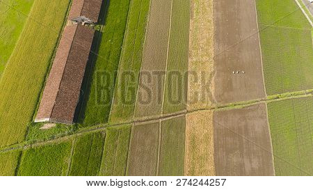 Agricultural Landscape In Asia With Rice Fields, Farmers Village Agricultural Land With Sown Green I