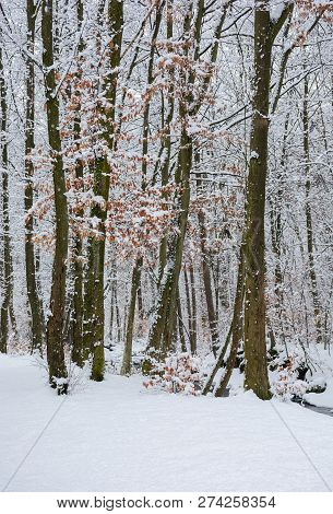 Winter Forest With Some Fall Foliage In Snow. Beautiful Nature Background