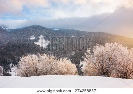 Gorgeous Winter Sunrise In Mountains. Glowing Hoarfrost On Trees In Morning Light. Exquisite Nature
