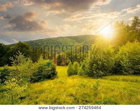 Forested Area In Mountains At Sunset In Evening Light. Calm Nature With Green Grassy Meadow And Clou