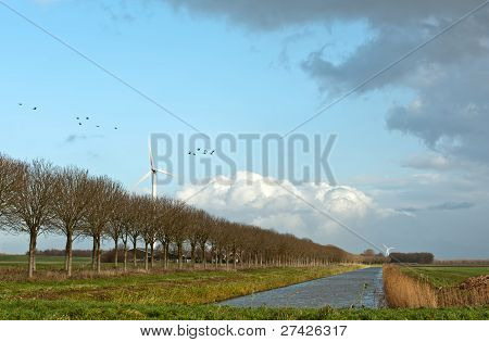 Birds flying over the water of a canal