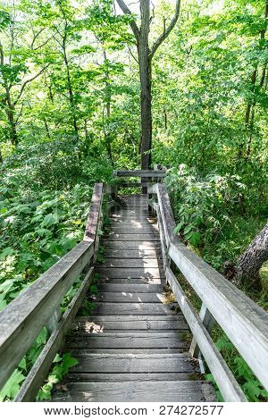 Vertical Landscape Of A Long Wooden Stairway Through Trees And Foliage At The Champlain Lookout On A
