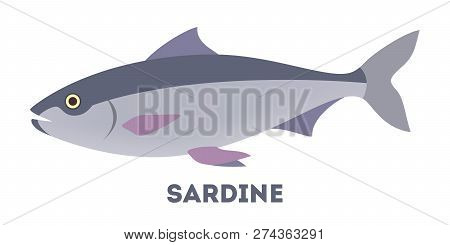 Sardine Fish From The Ocean Or Sea.