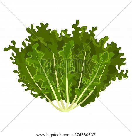 Mizuna Fresh Salad Leaves, Healthy Organic Vegetarian Food, Vector Illustration On A White Backgroun
