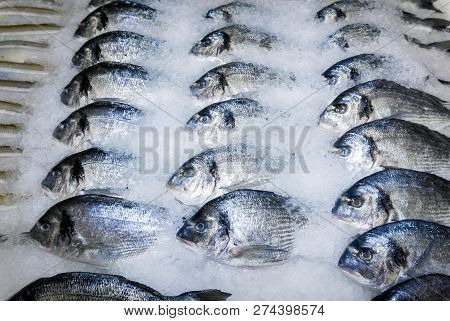 Dorade Fish In The Snow On The Shop Counter
