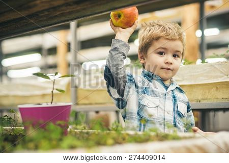 Planting Apple Trees. Small Boy Share Apple And Planting Trees. Planting Apple Trees With Little Gar