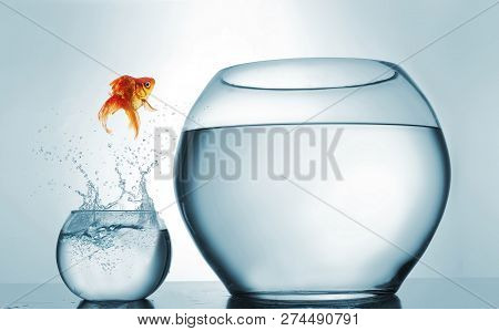 Jumping To The Highest Level - Goldfish Jumping In A Bigger Bowl - Aspiration And Achievement Concep