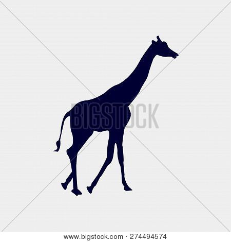 Vector Silhouette Of A Giraffe On A White Background.
