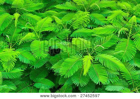 Top View Of Tropical Forest