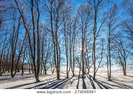 Bright winter frosty day. Dull polar winter sun. Long shadows on the snow. The concept of extreme and ecotourism