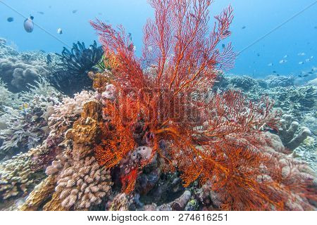 Coral Reef Off The Coast Of Bali Indonesia