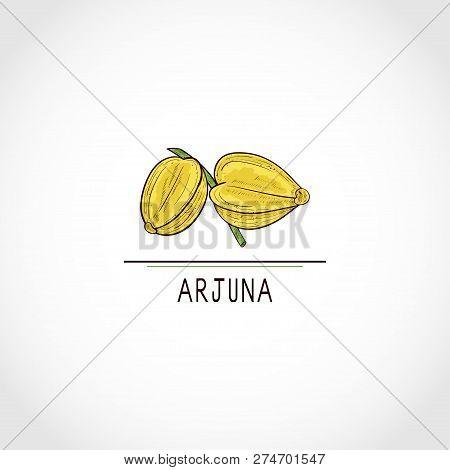 Arjuna. Fruit, Leaves. Color. Logo, Sign, Symbol, Icon. Sketch