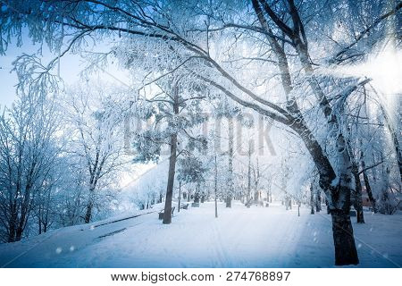 The fabulous radiance of lateral sunlight through the branches of snowy trees on a frosty winter day poster