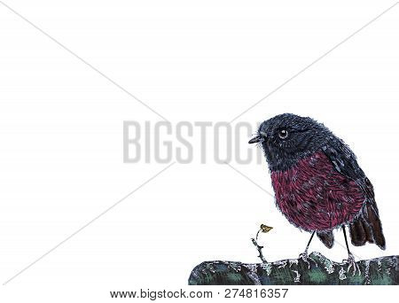 Hand Drawn Spring Pink Robin Bird Sitting On Green Branch. Hand Painted Petroica Rodinogaster Isolat
