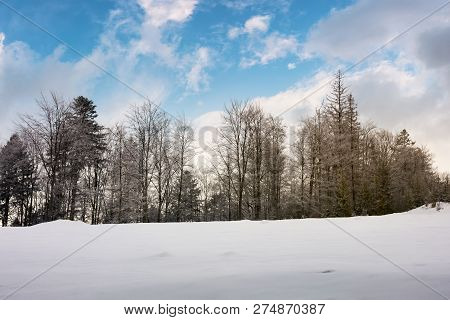 Trees On A Snowy Hill. Lovely Nature Scenery With Beautiful Sky In Winter