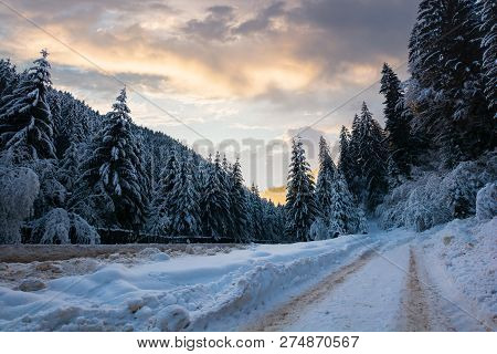 Road In Snow Through Winter Forest. Beautiful Scenery In Mountains. Spruce Trees In Snow