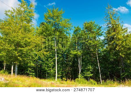 Margin Of The Beech Forest. Lovely Nature Scenery In Summertime