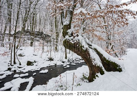 Tree By The Creek In Winter Forest. Weathered Foliage Along The Snow Covered Shore. Beautiful Nature