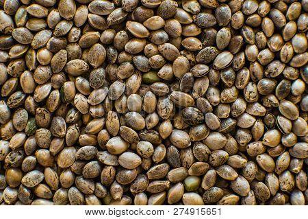 Macro Detail Of Marijuana Seed. Organic Hemp Seed. Hemp Seeds Background In Macro. Close Up. Many Ca