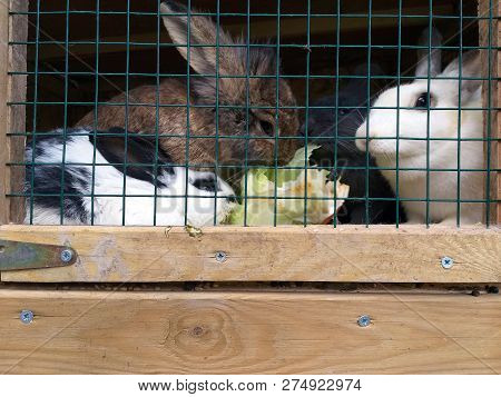 Rabbits On The Farm And Animal Farm Nature