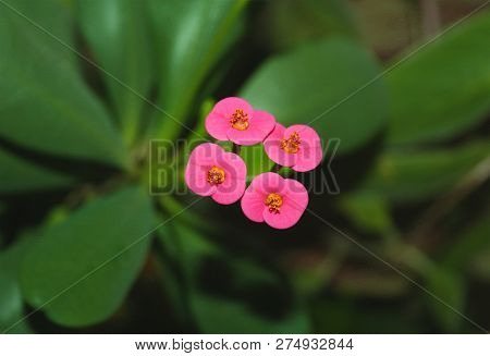 Tiny Tiny Flowers Pink Flowers Background Leafs