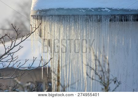 The Roof Of A House Covered With Snow And Icicles. Icicles Hanging From Roof. Winter In Latvia. Whit