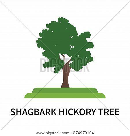 Shagbark Hickory Tree Icon Isolated On White Background. Shagbark Hickory Tree Icon Simple Sign. Sha