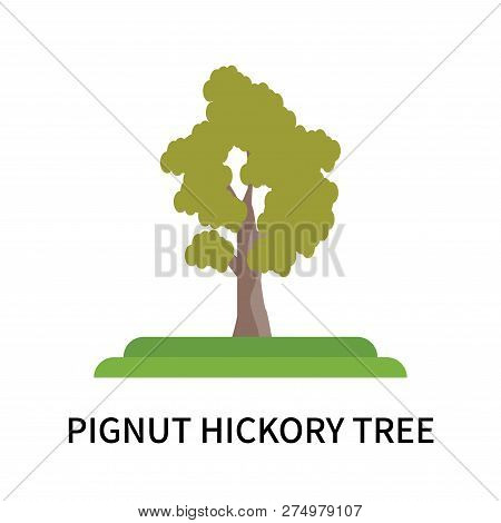 Pignut Hickory Tree Icon Isolated On White Background. Pignut Hickory Tree Icon Simple Sign. Pignut