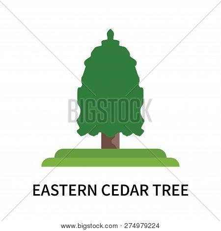 Eastern Cedar Tree Icon Isolated On White Background. Eastern Cedar Tree Icon Simple Sign. Eastern C