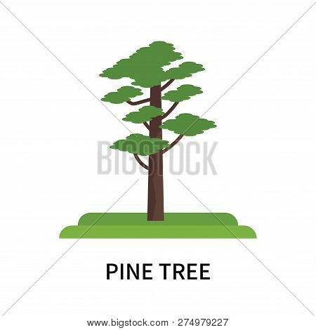 Pine Tree Icon Isolated On White Background. Pine Tree Icon Simple Sign. Pine Tree Icon Trendy And M