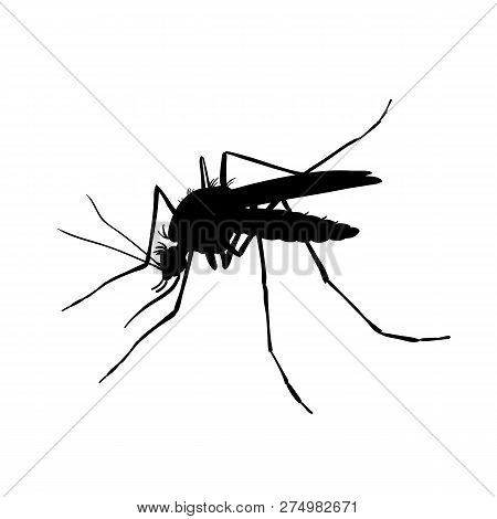 Mosquito. Black And White Drawing By Hand. Silhouettes
