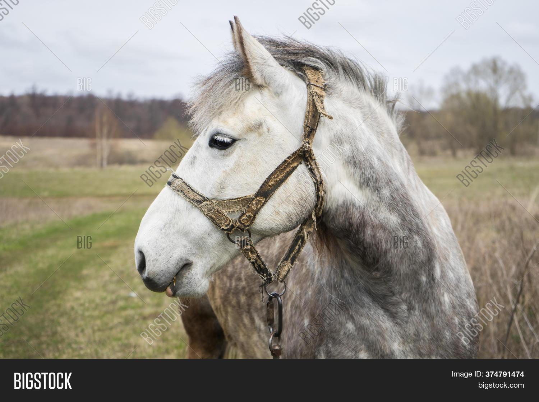 White Beautiful Horse Image Photo Free Trial Bigstock