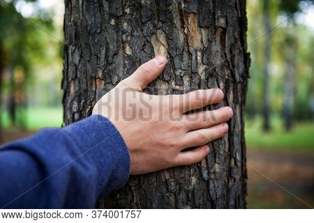 Hand On The Trunk Of The Tree In The Forest Closeup