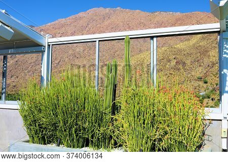 Manicured Drought Tolerant Cacti And Succulent Plants On An Outdoor Patio Overlooking Arid Mountains