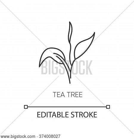 Tea Tree Pixel Perfect Linear Icon. Skincare Product Component. Organic Beauty. Herbal Moisture. Thi