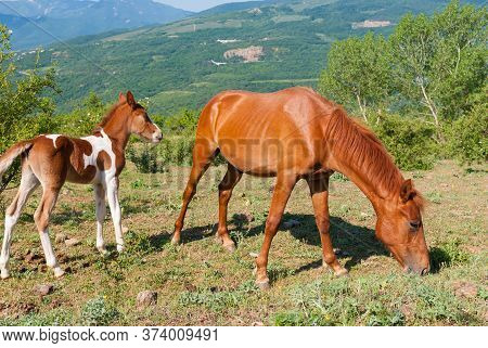 Mare  And Foal Horses Grazing In Valley Of Ghosts Of Crimean Mountains At Spring Season