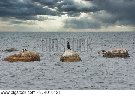 A Cormorant, Halacrocoracidae On A Stone. Dark Ocean And Dark Sky As A Background. High-quality Phot