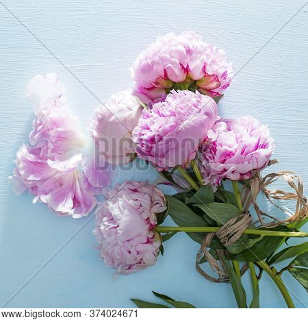 Pink Peonies Bouquet Closeup, Spring Flowers For Mother's Day On Ligh Blue Wooden Background. Weddin