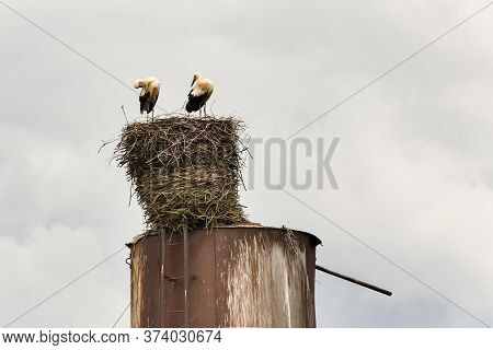 A Nest With Storks On An Old Water Pump. Storks In The Wild.