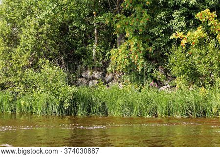 The Bank Of The River Fortified By Boulders. Nature On The Banks Of The Volkhov River.